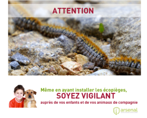 Attention aux chenilles processionnaires