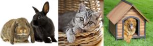 lapin-chien-chat-entetien